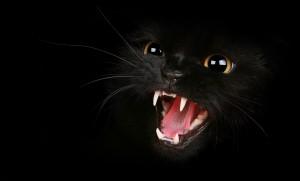 un-gato-negro-furioso-8684